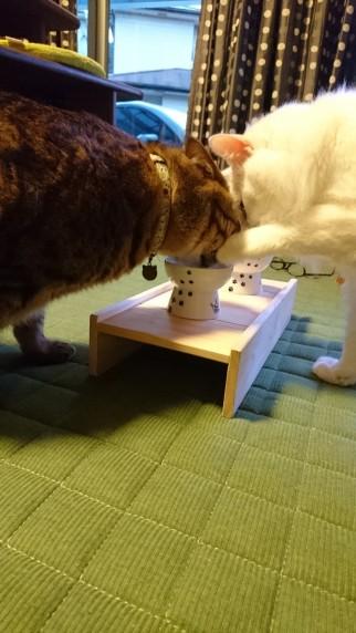 猫用食器台